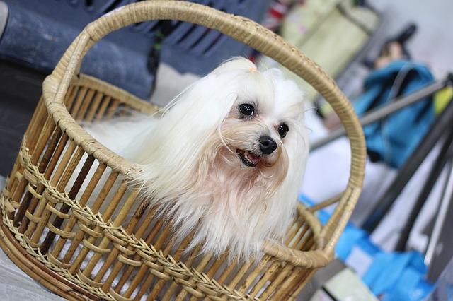 pes v proutěném košíku