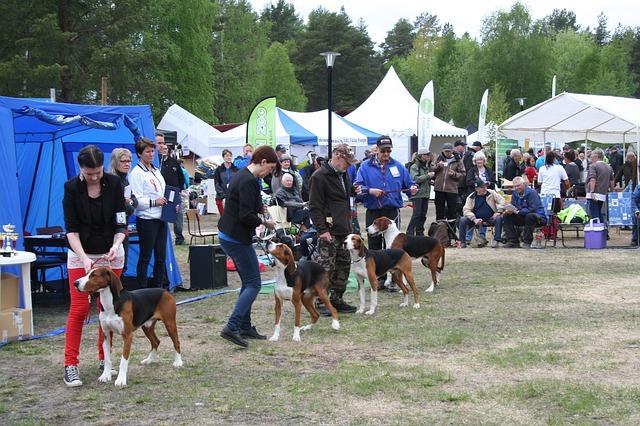 výstava psů ve Švédsku