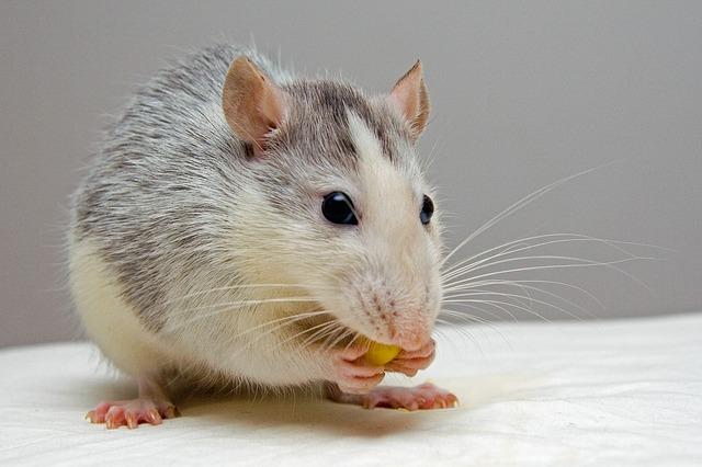 křeček s potravou