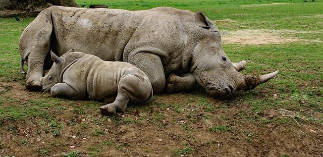 matka a syn nosorožec