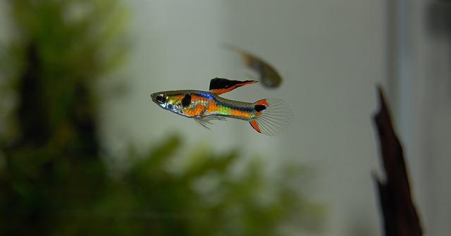 barevná rybička