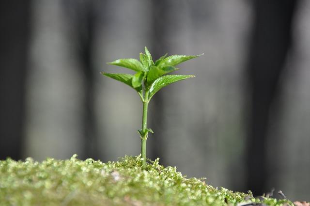 rostlina na mechu