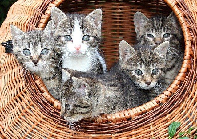 koťata v koši