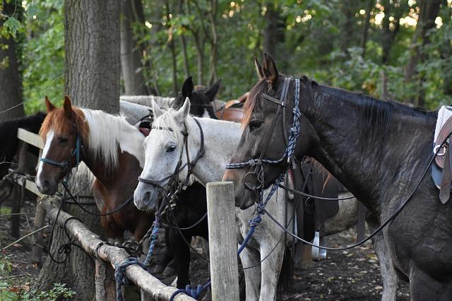 skupina různě barevných koní uvázaných k zábradlí