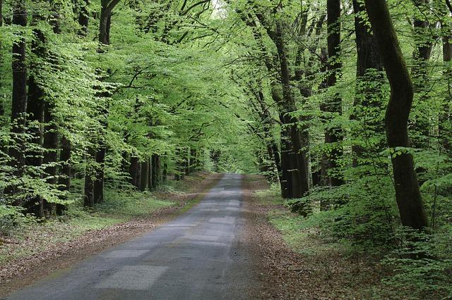 listnatý les, cesta.jpg
